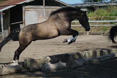 自由に飛越する馬