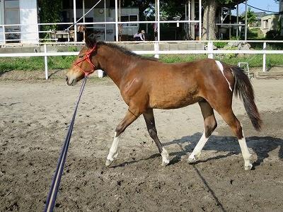 新馬調教 馬も人もリラックス!