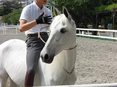 馬の調教方法
