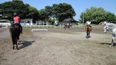 馬の障害物競走