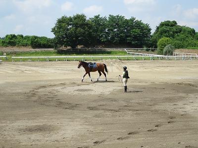馬の準備運動