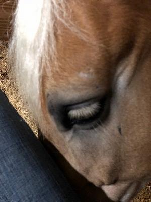 馬がすりすりしてくる