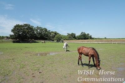 乗馬の育て方