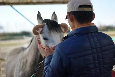 馬に愛情を伝える