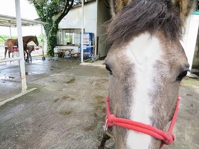馬とのコミュニケーション「