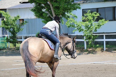 馬を愛する乗馬