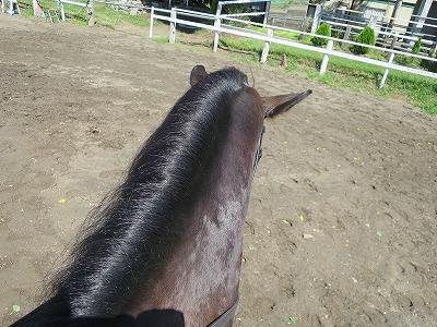 馬とはやっぱり絆と愛だね