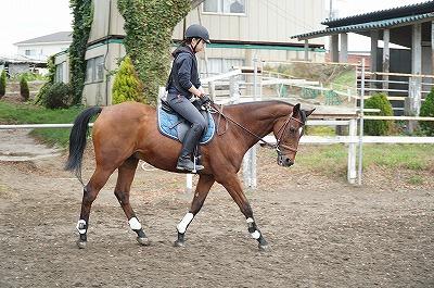 乗馬は馬ではなく自分を乗りこなすもの