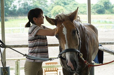 丹念な馬のケア