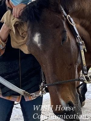 手入れを喜ぶ乗馬