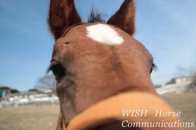 馬と話せるようになろう