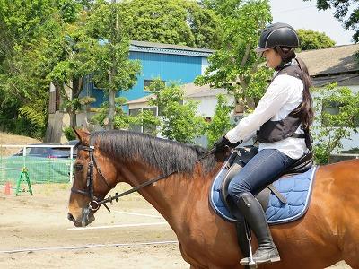 馬と仲良くしたい