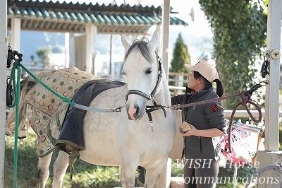 可愛く美しい馬