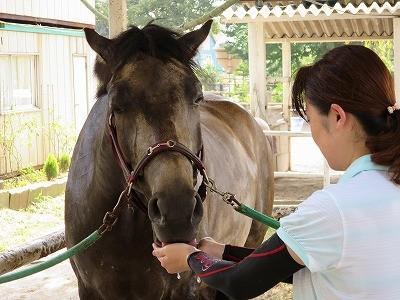 馬を慈しむ