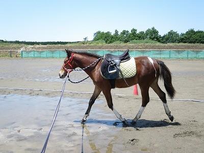 新馬調教 水を教える