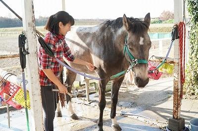 馬に好かれる乗馬方法