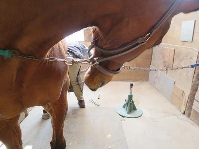 馬の声なき声を聴け
