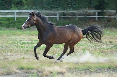 幸せな馬が幸せな乗馬をくれる