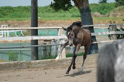 馬に自由と喜びを!