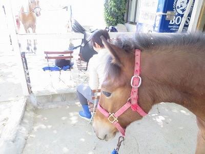 新馬調教 リーディングはすべての基本