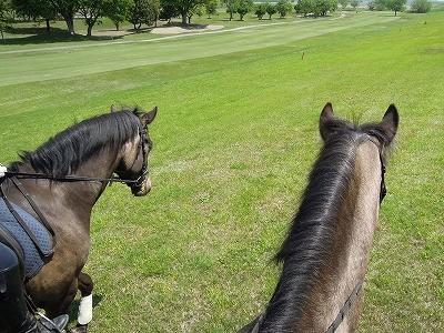馬は仲良し