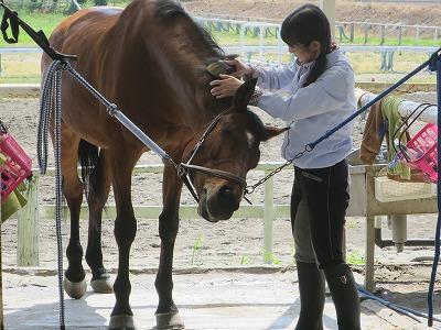 馬は表情がわかりやすい