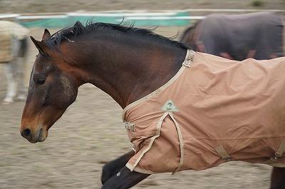 コントロールすべきは馬ではなく自分である