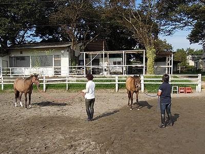 素晴らしい馬とのコミュニケーションの世界!