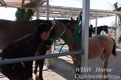 馬とひそひそ話