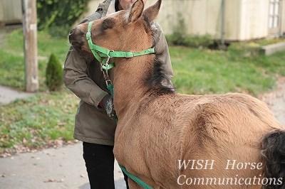 馬の愛情を感じるのが好き