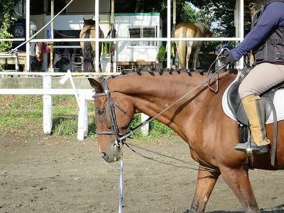 馬との楽しい生活