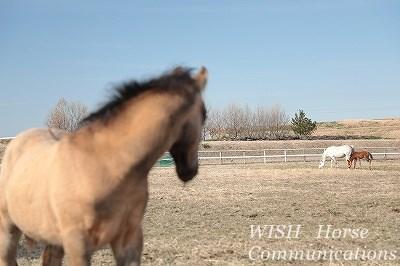 馬のコミュニケーション