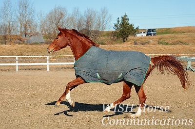 乗馬と砂時計