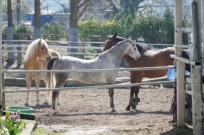 馬のハッピーコミュニケーション