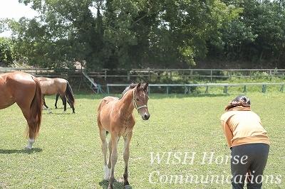 馬と共に歩む乗馬