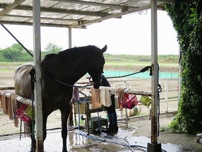 馬は見ているよ
