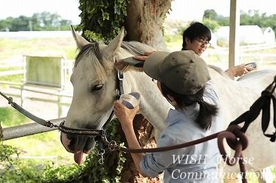 馬と話す乗馬