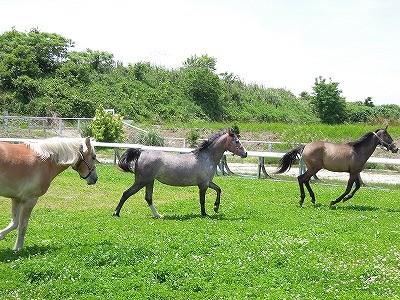 馬と遊べる乗馬クラブ