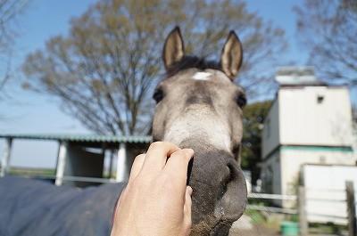馬と仲良くしよう