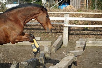 馬が心を許してくれる