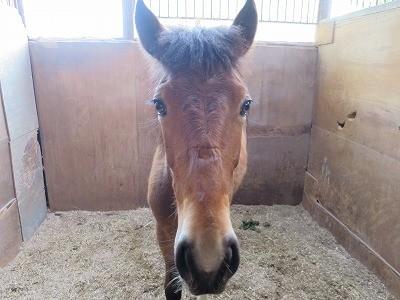 新馬調教 馬と仲良くなりたかったら馬を拘束しない