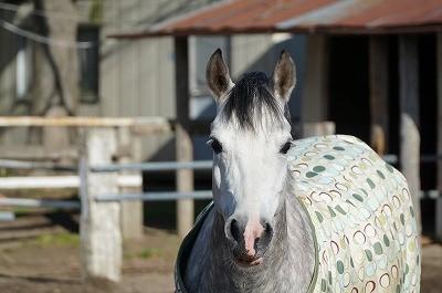 幸せな馬をパートナーにしよう