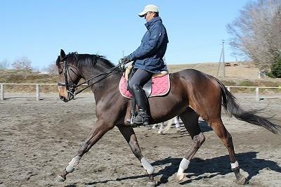 すべての馬にはいい馬になる可能性がある