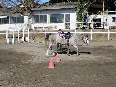 乗馬の基礎力