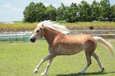 馬を健康に保つ