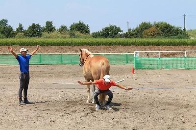 馬のお尻ですべり台