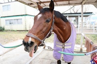 馬の散髪屋さん