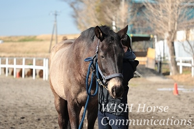 愛と笑いと感動の乗馬