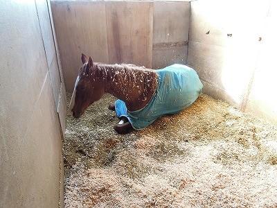 安心してリラックスしている馬
