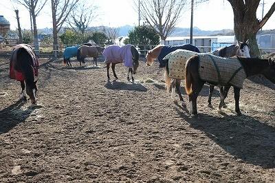 馬の喜ぶこと